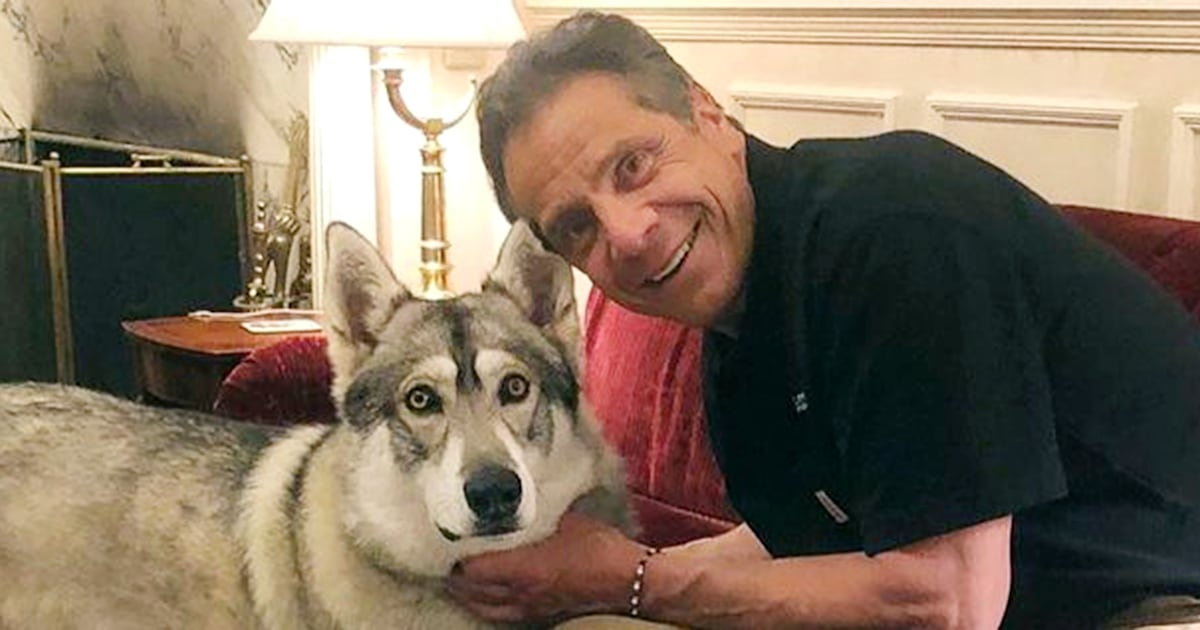 Andrew Cuomo responds to report he left his dog behind at governor's mansion