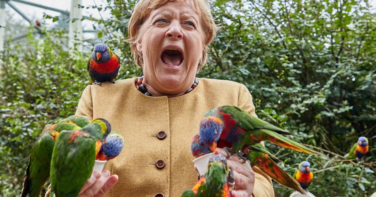 Angela Merkel pecked by parrot during visit to German bird park