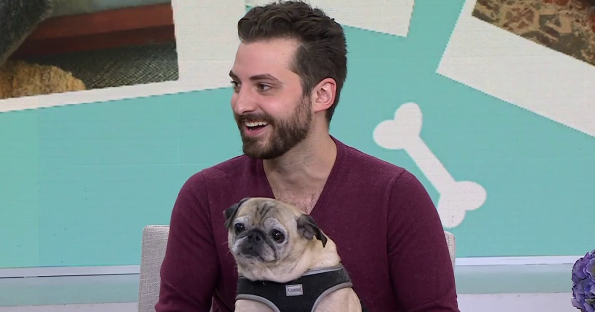 Is it a 'bones or no bones' day? Noodle the pug stops by to forecast your morning
