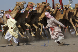 Image: Omani trainers run in front of their camels at the start of the annual camel race in the Flaija race court in the south of Muscat