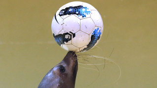 Image: Twenty-one-year-old female seal Sarasa controls a soccer ball as part of an event cheering for Japan's national soccer team's success at the upcoming the 2014 World Cup soccer tournament, during a new show at the Shinagawa Aqua Stadium aquarium
