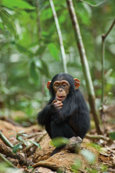 Топ 5 самых умных животных