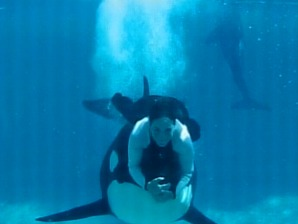 Orcas regularly involved in deaths of trainers - Technology