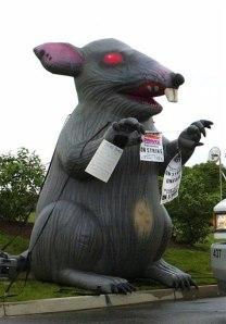 Court Blow Up Rat Has Free Speech Rights Us News