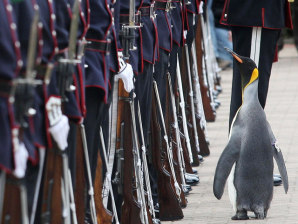King penguin knighted by Norway - World news - Weird news ...