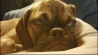 July 31: A puppy named Earl has captured the Internet's collective heart, as photos of the grumpy-faced pup have gone viral over the past week. Bailey Deitz from NBC affiliate KWQC has more.�(Other)