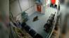 Video: Curious koala visits Australia emergency room