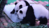 """July 29: Panda party! A set of giant panda triplets celebrated their 1st birthday at a zoo in southern China on Wednesday, enjoying special ice """"cake"""" and a musical performance in their honor.(Other)"""