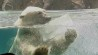 Feb. 27: To celebrate International Polar Bear Day, we tracked down some pretty cool bears hamming it up for the cameras. For information on protecting these endangered animals, please visit www.polarbearsinternational.org.(Other)