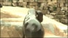 """July 2: A pair of adorable sea lion pups made their debut at the Henry Doorly Zoo & Aquarium in Omaha, Nebraska on Thursday. The pups could be seen catching some rays and trying out their best """"barks.""""(Other)"""