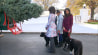 """Nov. 28: Michelle, Malia, Sasha, Bo, and Sunny Obama greet the White House Christmas tree after it was delivered to the first family�s residence by a horse-drawn carriage. Michelle Obama asked, """"Are they sure they can get this in the door?"""" �(Other)"""