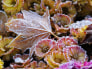 Image: Ice crystals on leaves and flowers