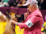 Image: 136th Westminster Kennel Club Dog Show