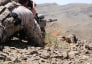A Navy SEAL sniper scans the terrain while on an operation in Zabul province, Afghanistan.