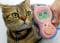 "Image: A cat sits beside a cat-language electronic interpreter ""Meowlingual"" of Japan's toymaker Takara Co."