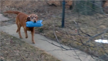 Dog Delivering Newspapers Today Show