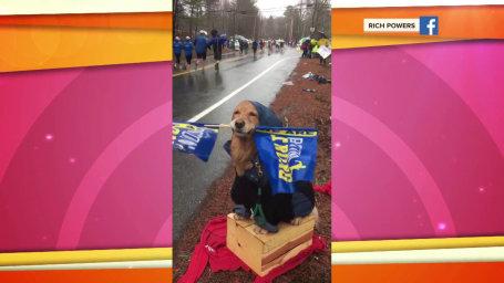 Celebrity boston marathon runners names
