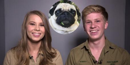 Pets Todaycom