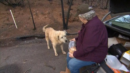 woman who escaped wildfire returns home to find lost dog waiting for her