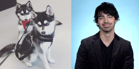 942af548c52 Joe Jonas explains how he adopted his dogs with fiancee Sophie Turner