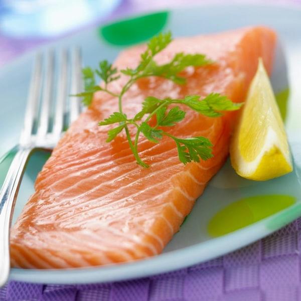 genetically modified salmon essay