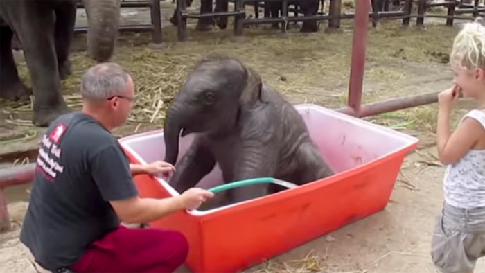thailand elephant camp posts video of baby elephant taking a bath. Black Bedroom Furniture Sets. Home Design Ideas