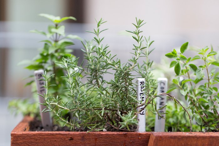 How to grow herbs when to water how much sunlight more for How much sun does a garden need