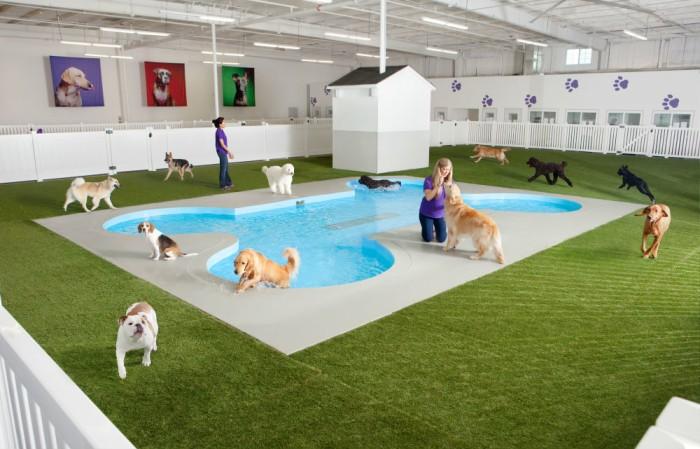 Kennedy airport s ark terminal aims to make pet travel - Climatizar piscina exterior ...