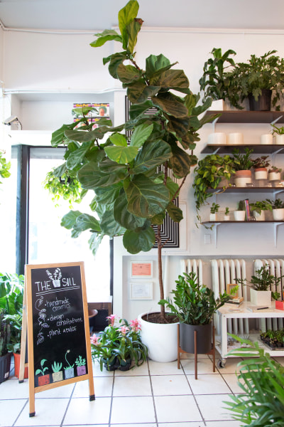 The easiest indoor house plants that won 39 t die on you Large house plants