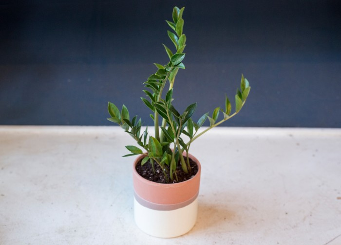 Indoor houseplants you can 39 t kill unless you try really for No maintenance indoor plants
