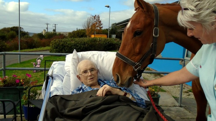 Horse visits dying man.