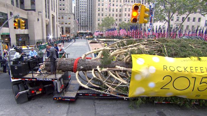 """神戸市、""""世界一高いクリスマスツリー""""の為に樹齢150年のあすなろを切り倒す。 テーマは「輝け、いのちの樹」  [838847604]->画像>57枚"""