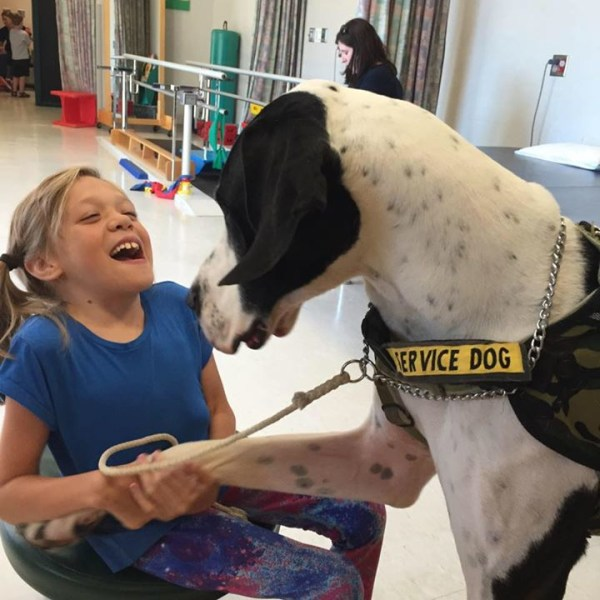 Great Dane Service Dog Of The Year