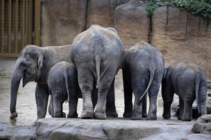 Image: Elephants at Emmen Zoo