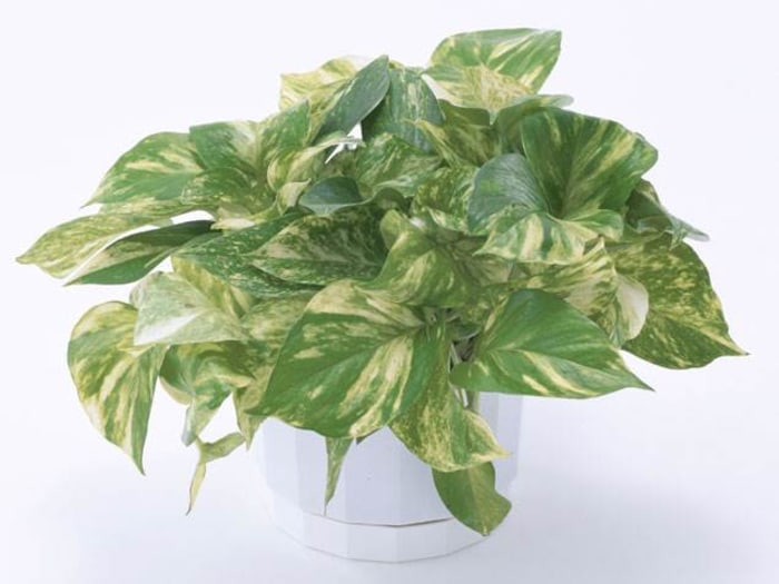 The easiest indoor house plants that won 39 t die on you for Easy to grow indoor plants