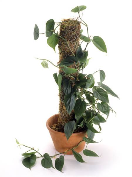 dave kingdorling kindersleygetty images cheap office plants