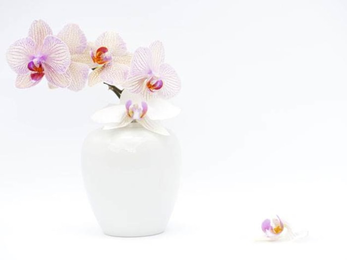 how to keep a orchid plant