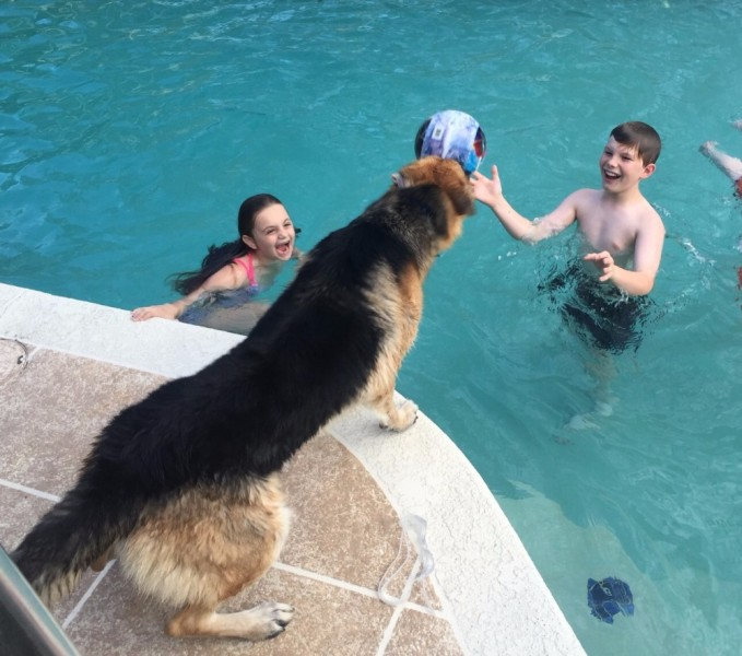 Haus the dog plays with the DeLuca kids