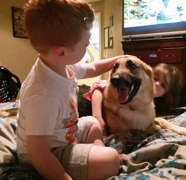 Haus, the hero dog, plays with the DeLuca kids