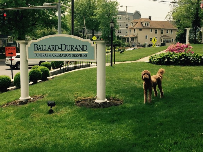 Funeral Home's Therapy Dog Comforts Mourners