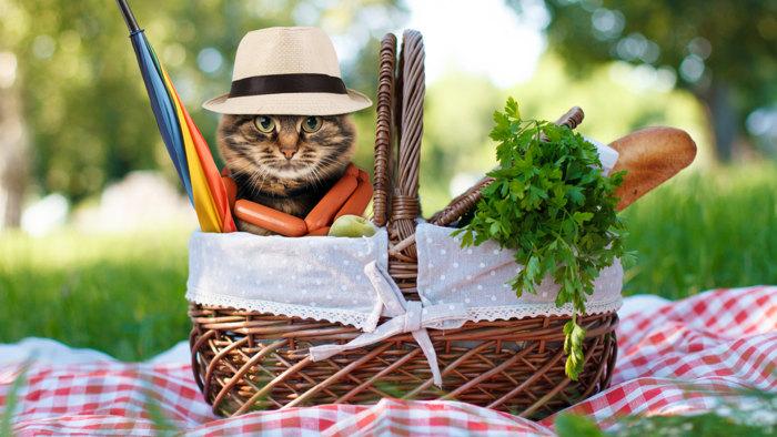 8 tips for a perfect picnic, plus easy al fresco recipes ...