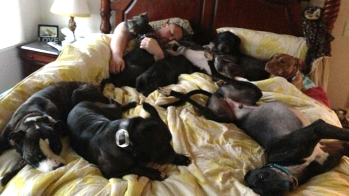 Couple Creates Giant Bed To Sleep Comfortably With 8 Dogs