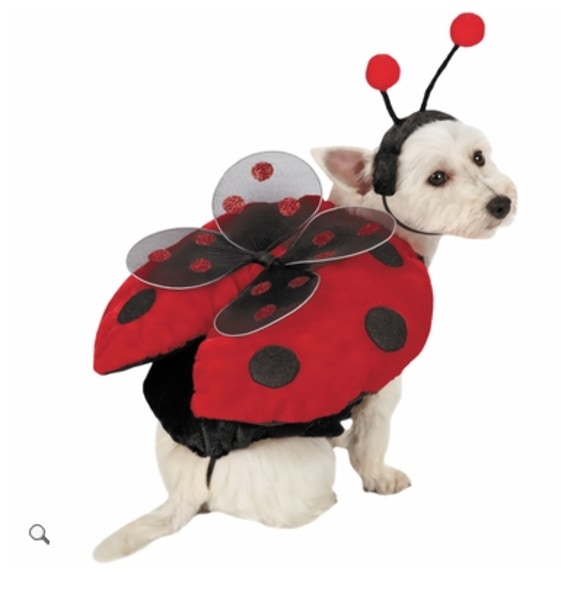 entirelypetscom - How To Make A Dog Halloween Costume