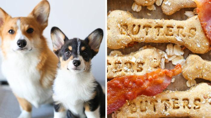Bacon dog treats and corgis