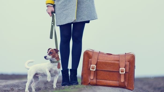 Traveling with your pet? Essential tips to know before you go