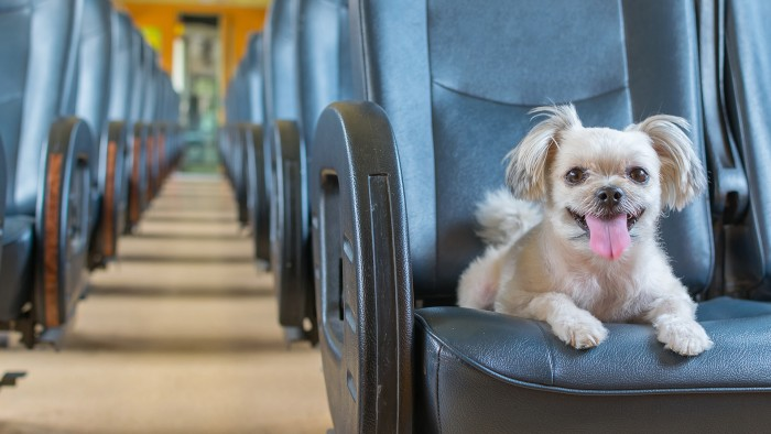Pet travel tips how to fly or drive with your dog or cat for Traveling on a plane with a dog