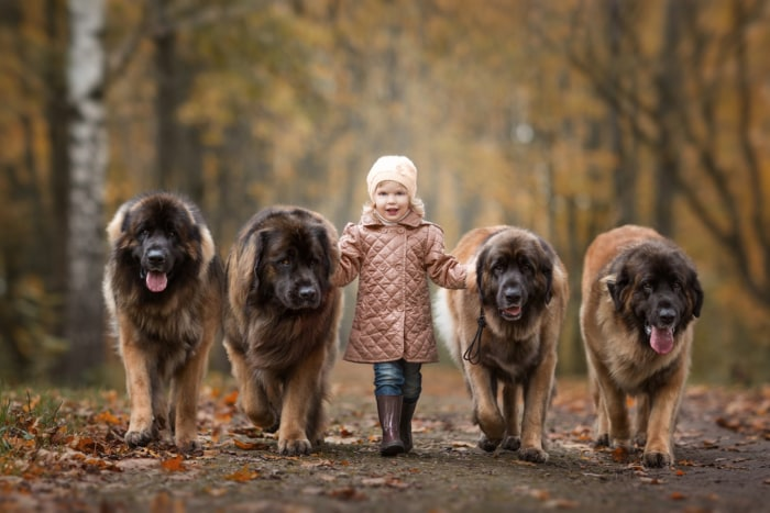 Huge dogs and their tiny owners bring big smiles in new book ...