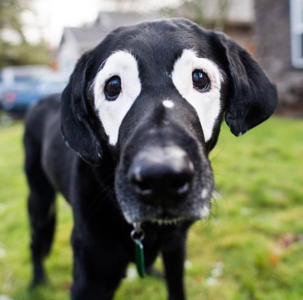 Dog With Vitiligo Meets Kids With The Condition Today Com