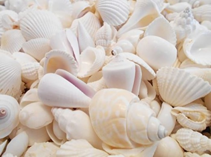 seashells seen on Jill Martin Today Show