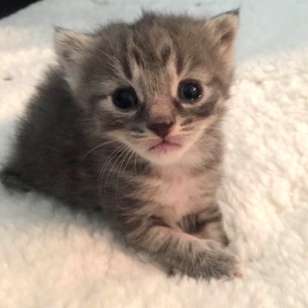 Kitten season: How to foster, adopt and volunteer at ...